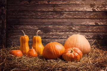 various pumpkins on wooden background