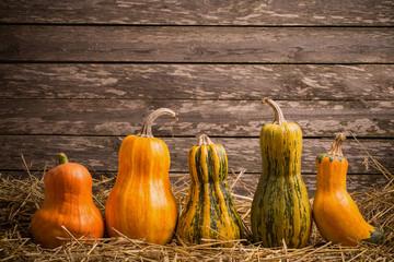 various pumpkins on wooden background