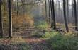 canvas print picture - Waldweg im Herbst