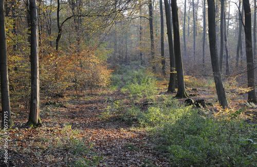 canvas print picture Waldweg im Herbst