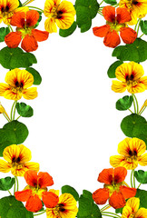 frame of autumn flowers nasturtium