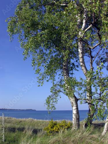 Leinwanddruck Bild Insel Rügen