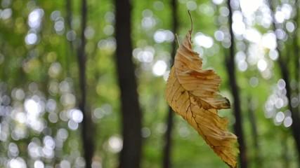 Листок на ветру