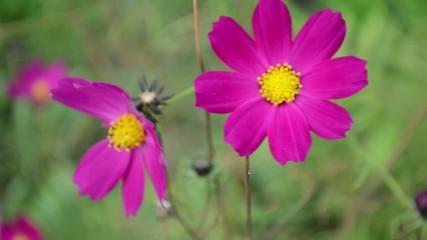 Цветок на ветру