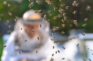 pszczelarz pracujący w pasiece i rój pszczół