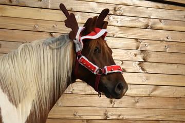 Poney déguisé en renne de Noël