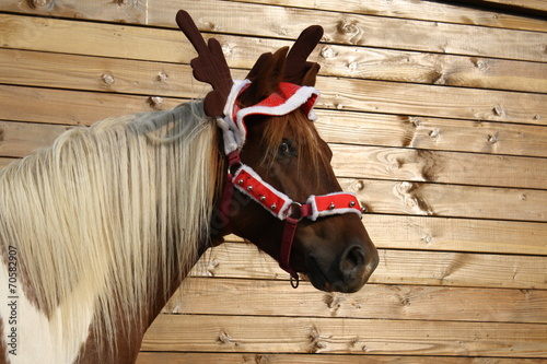 Staande foto Paarden Poney déguisé en renne de Noël
