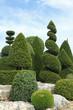 arbuste art topiaire
