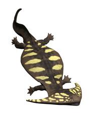 Diplocaulus - Prehistoric Amphibian