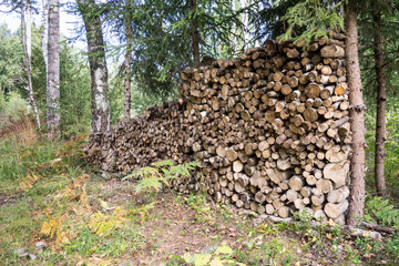 stacked firewood of spruce in the forest