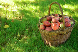 Organic apples in wicker basket on the grass