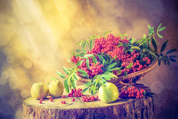 Autumn fruit basket red rowan sun Still Life