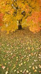 Rainy Day in Autumn