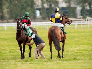 checking race horse saddle