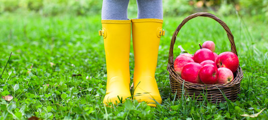 Closeup of basket with red apples and rubber boots on little