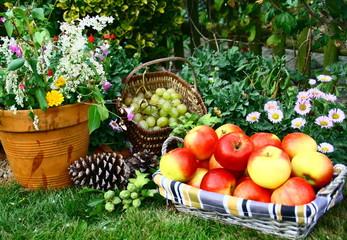 récolte  de raisins et pommes rouge au jardin en automne