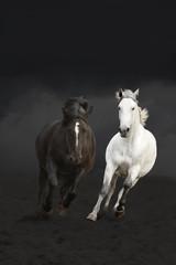 Black and white horses running in the dark