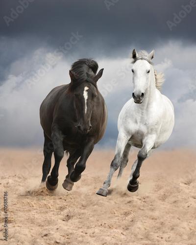 fototapeta na ścianę Czarne i białe konie Running Wild