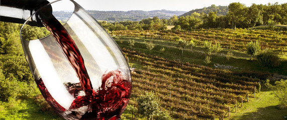 red wine in the vineyard
