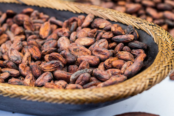 Cocoa beans in a tray