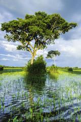 Nature in Pantanal, Brazil