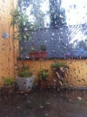 fleurs sous la pluie vue de l interieur