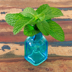 Fresh mint  in small blue vase on wooden table