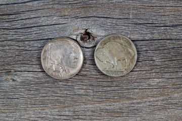 Vintage Buffalo Nickels on Age Wood