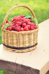 Wicker basket full of ripe raspberry on the painted wooden bench