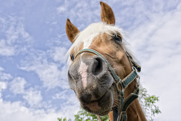 horse outside the house