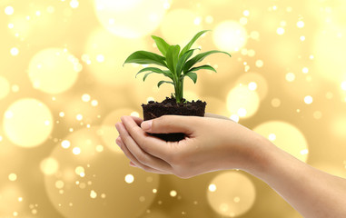 plant in the hand on gold background