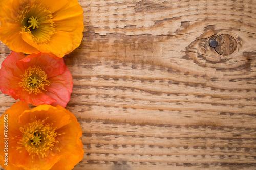 Keuken foto achterwand Poppy Poppy.