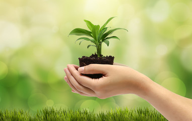 plant in the hand on natural background