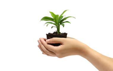 holding green plant in the hand