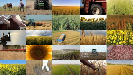 Montage selection of different crops and agricultural work