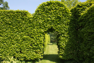Natural arch in a hedge in the garden