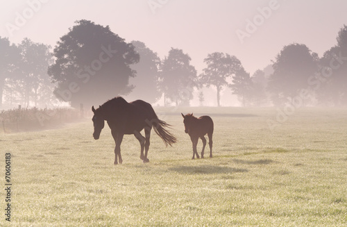 horse and foal in dense sunrise fog © Olha Rohulya