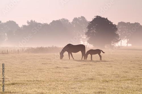 two horses grazing in fog © Olha Rohulya