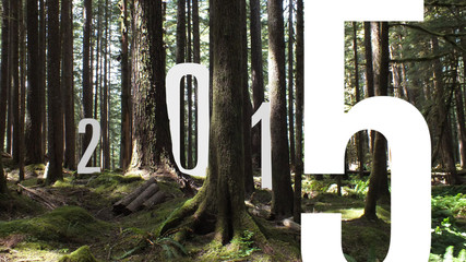 2015 in Forest
