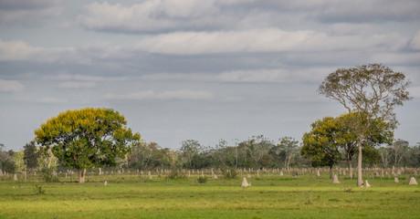 Termite nests in Pantanal, Brazil