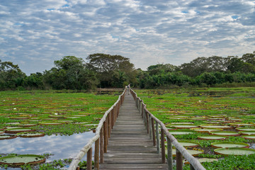 Brazilian Panantal skyline and wooden footbridge