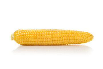 Long Corn Cob on white background
