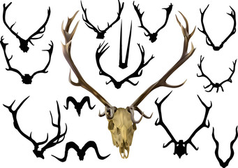 collection of fourteen antler and horns