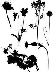 six wild black flowers silhouettes on white