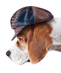 beagle in hat