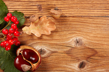 autumn leaf and chestnuts
