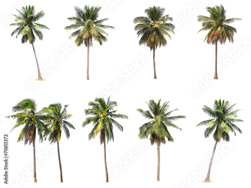 Deurstickers Palm boom Difference of coconut tree isolated on white
