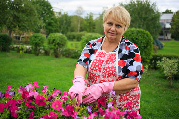 Senior woman in glove and apron gardening colorful flowers