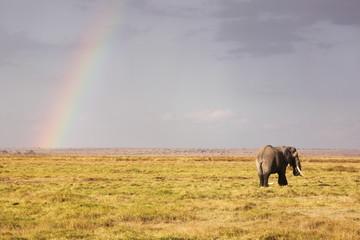 Éléphant au Kenya