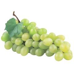 Green grapes in vectors